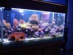 90 soft reef