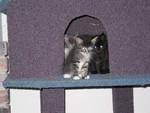 Highlight for Album: Kitten Invasion!