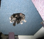 kitten in the hole!