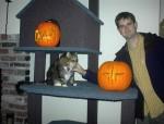 Where Dah? & Big Kitty & Pumpkins