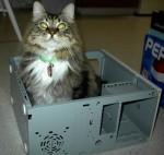 Big Kitty sittin inside one of my computer mods.