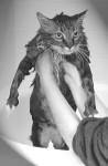 Big Kitty gettin a bath, not a happy camper!