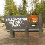 Highlight for Album: Yellowstone-2016