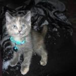 Meow Dah? (shot taken 2004.05.16) She's a cutie!
