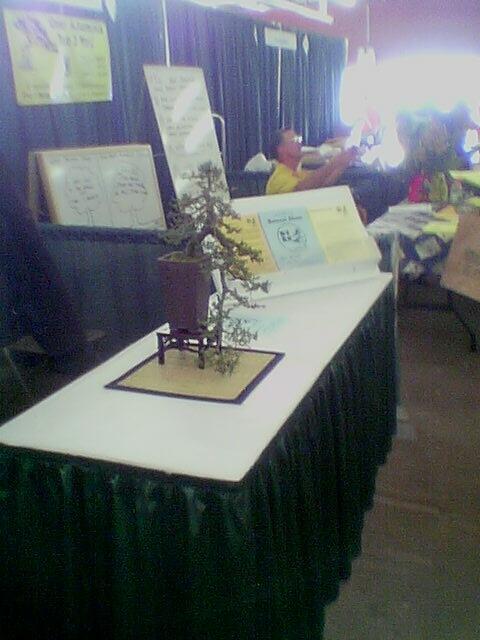 home show 2003: cool bonzai tree.. overexposed windows, eh?