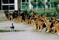 Brave cat...
