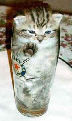 Bonsai kitty!