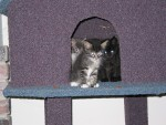 three kittens peaking through the cat house!