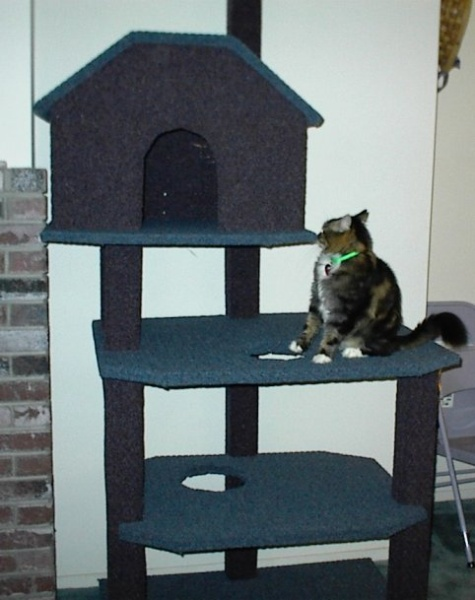 Big Kitty on 3rd ledge. I'm going to make a ladder from the 3rd platform (which he is on) to the top of the cat house to balance out the cat tree and make it a bit more decorative. He could easily jump from there to the top of the cat house too: