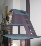 Afix to cat tree, insert cat!