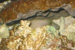 One of his favorite caves that he hung out w/ Mushu in a lot.