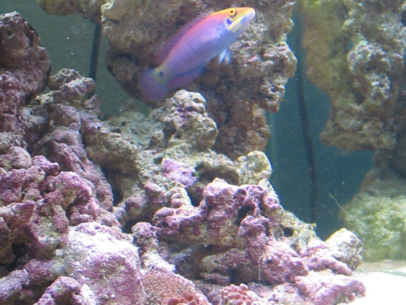 Show us your right! Happen to know what that bottom coral is?
