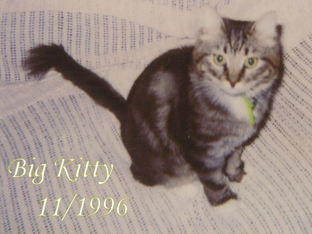 Big Kitty not so big: a kitten!