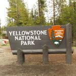Highlight for Album: Yellowstone-2016