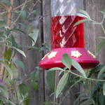 Highlight for Album: Hummingbirds