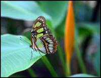 Highlight for Album: Butterfly Farm on Aruba