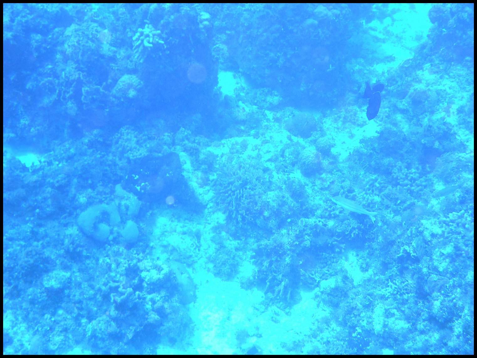 Some sort of black trigger and a couple other fish in the lower right.