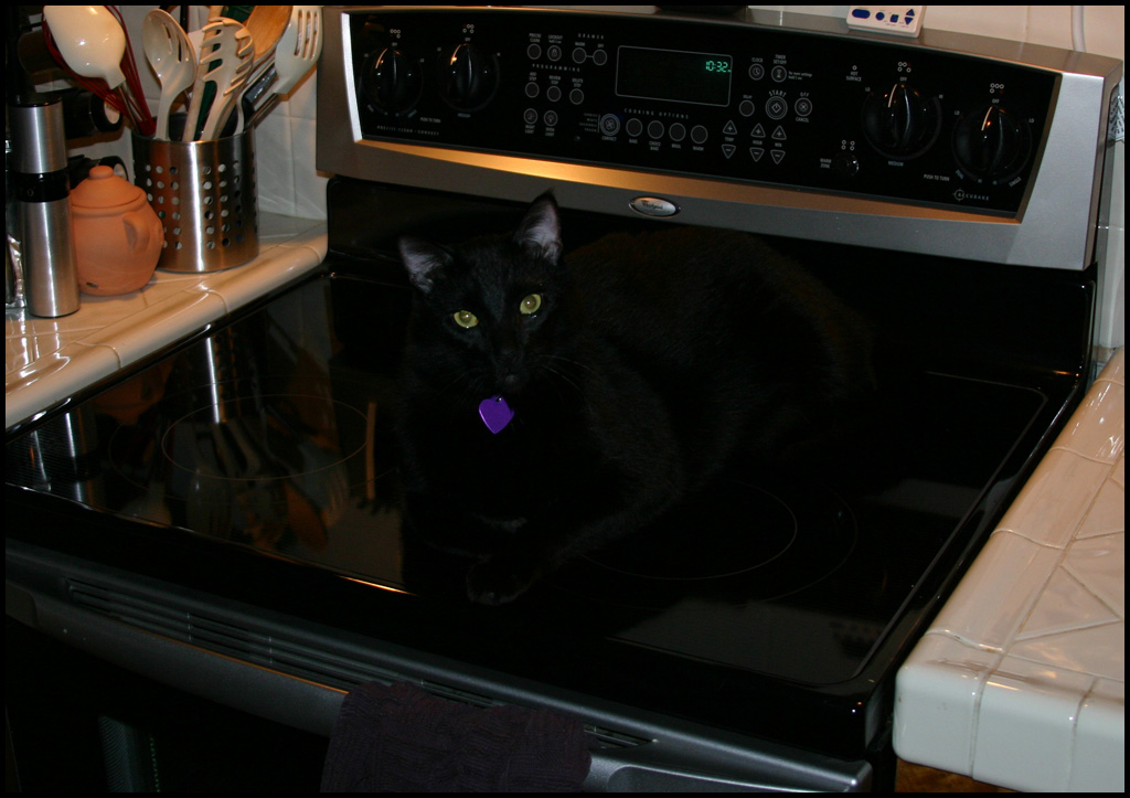 Spooky Camouflage Winston!